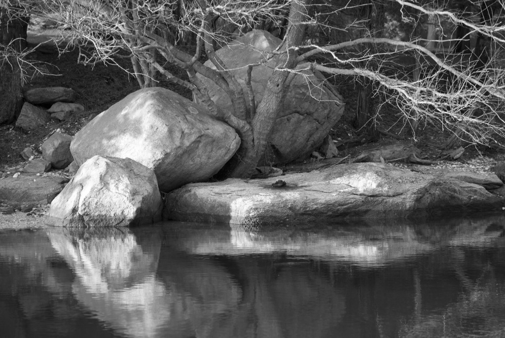 Stillness - Reflection I