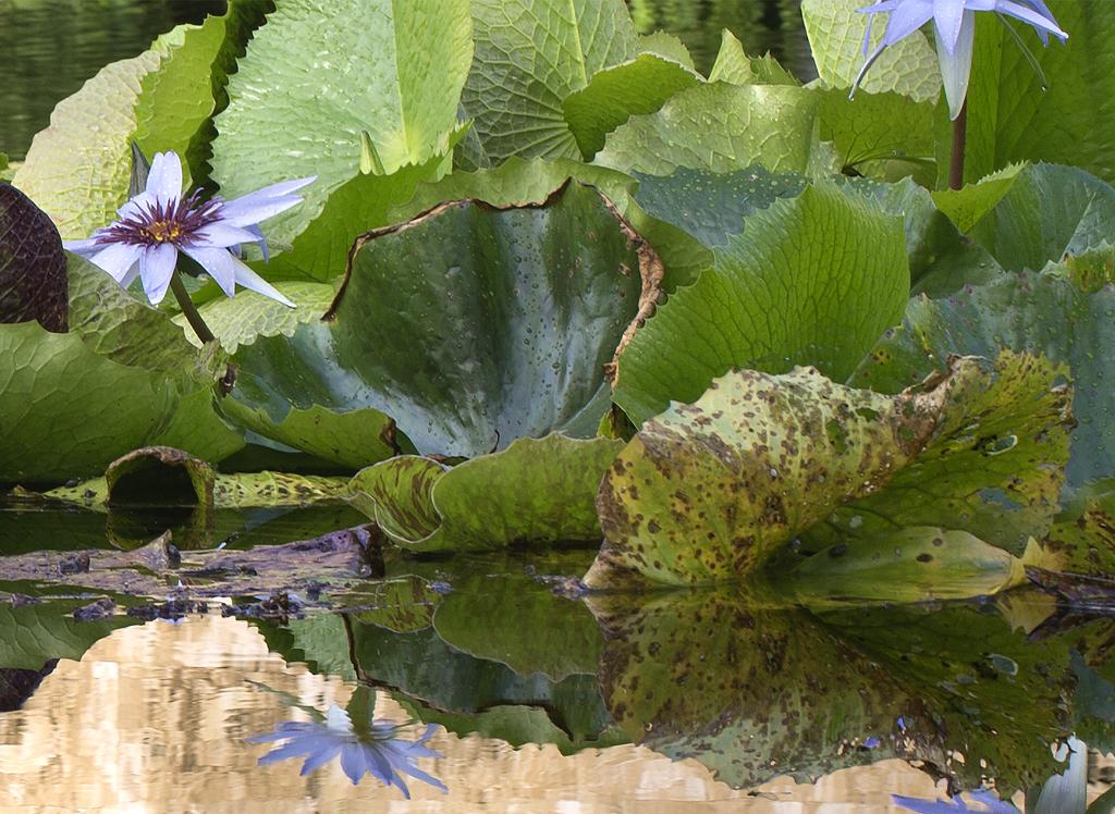 """Leaf and Flower (16.1""""X22"""");  11.7X16;  22X30"""
