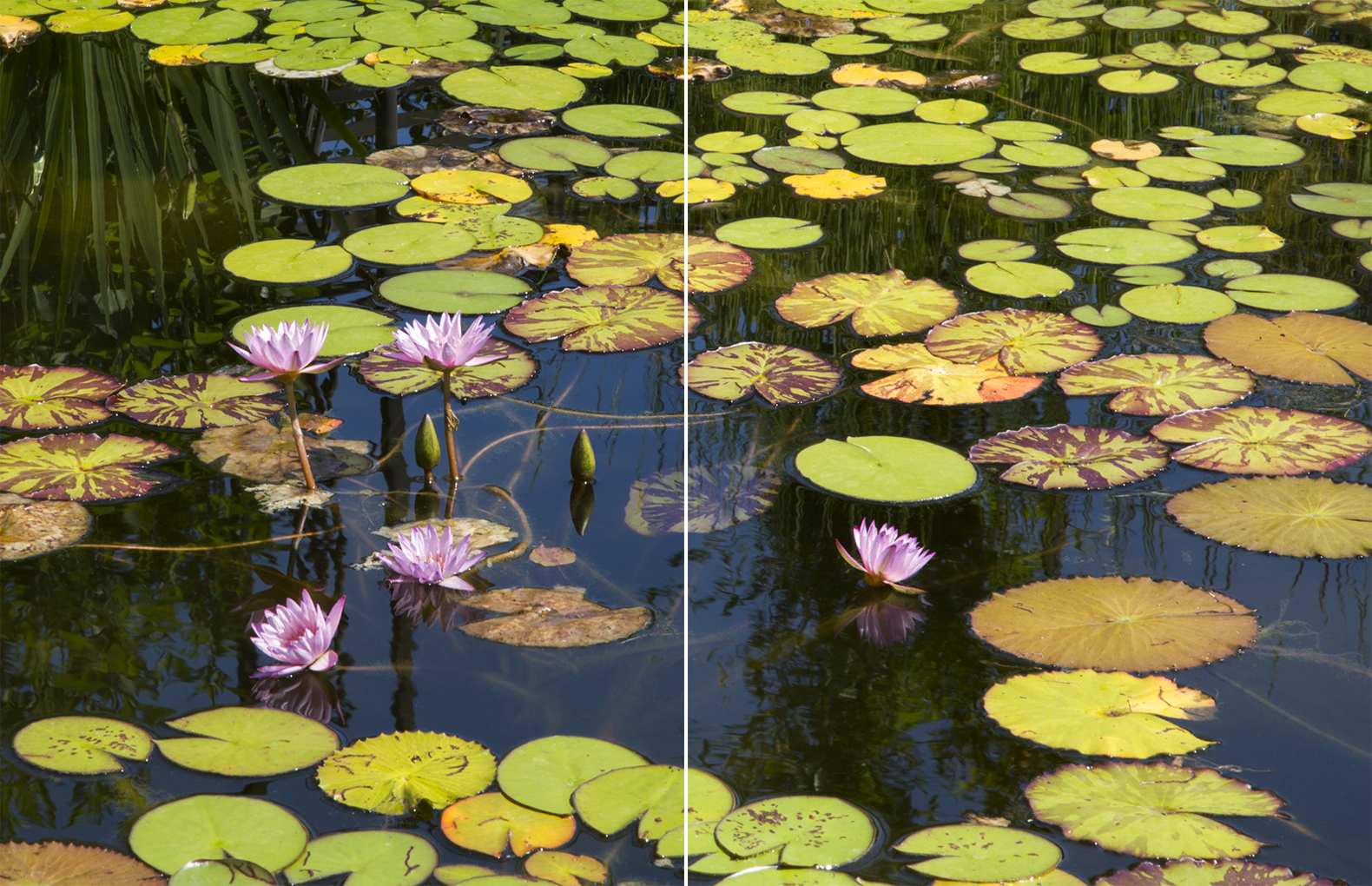 """WATER STAR (I and II) (2 panels each 22""""X17"""""""