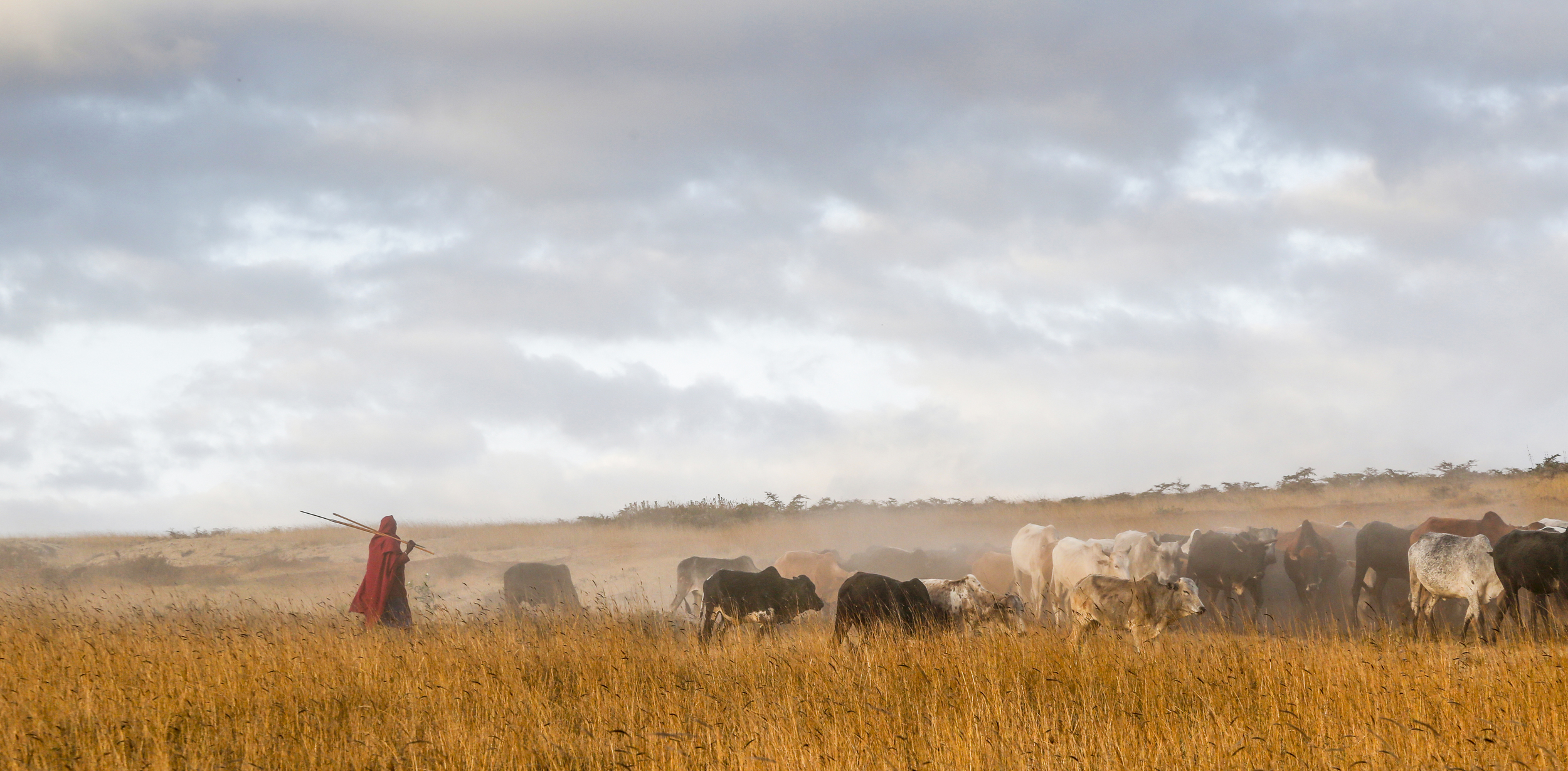 Masai Herder in the Mist