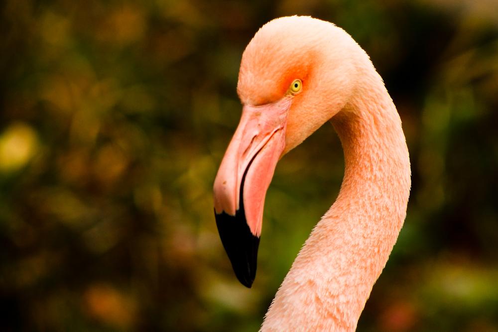 20120114-flamingohead2.jpg