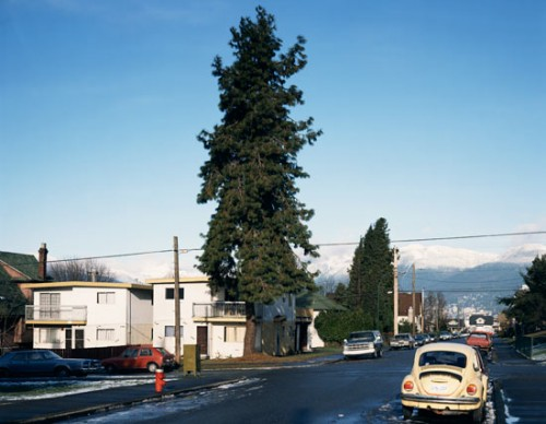 jeff_wall_pine_on_the_corner2-500x388.jpg
