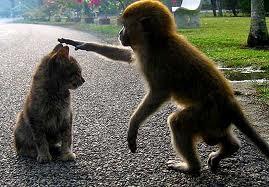 monkeyvscat.jpg