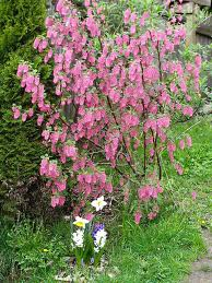 Love those flowers. Not comfortable hand pruning? We are!