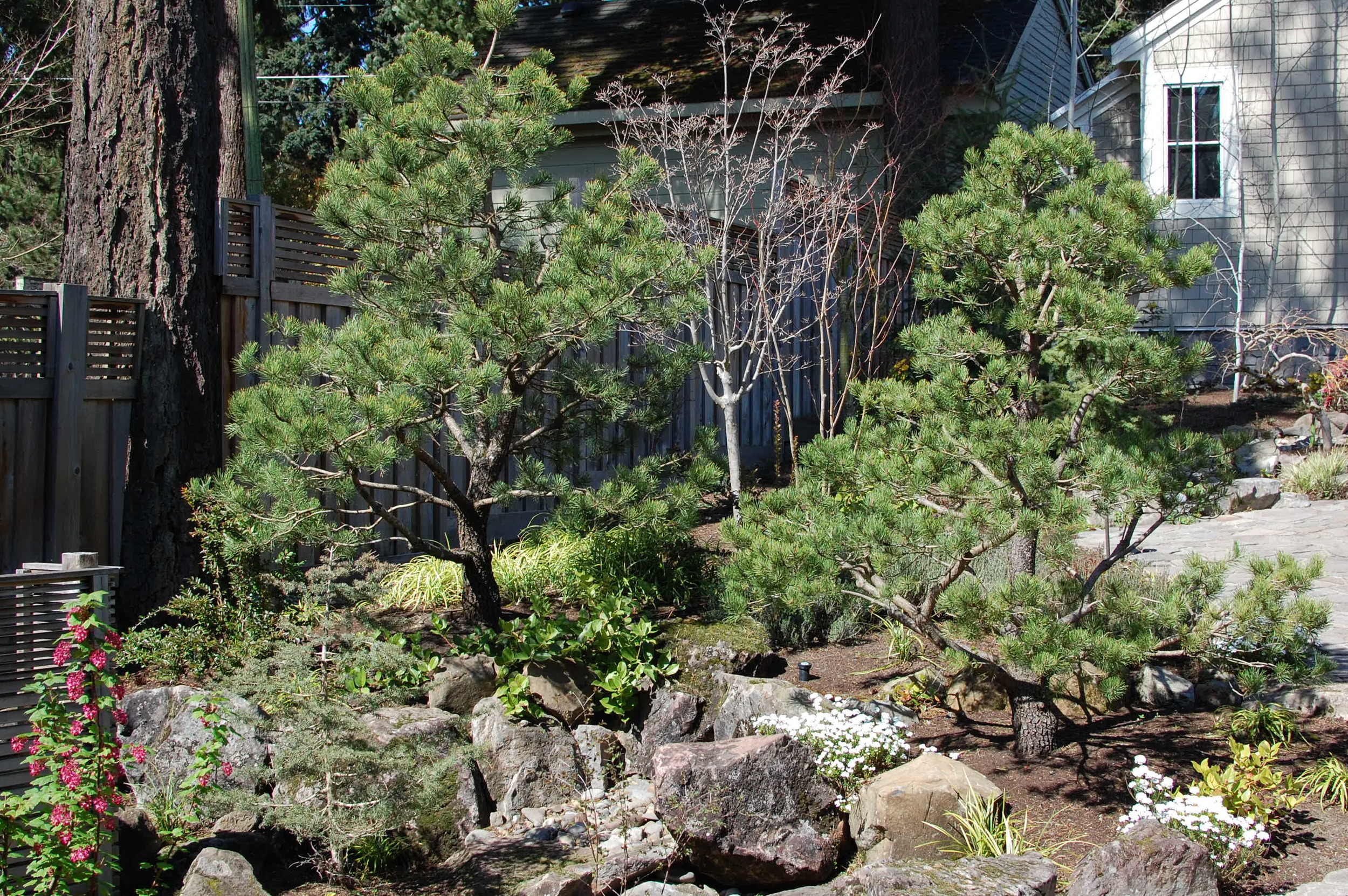 boulders-shore-pines.JPG