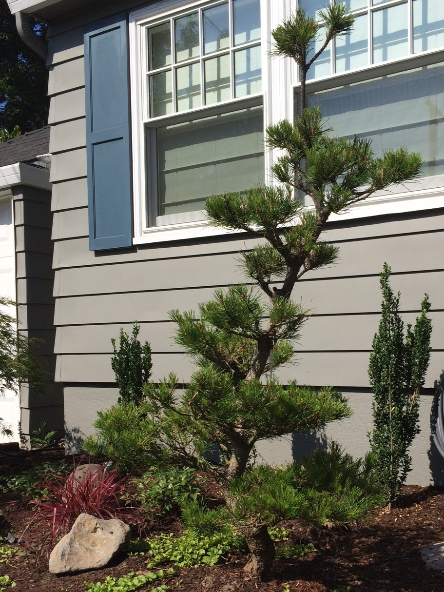 A well pruned Pine tree could be all the inspiration you need.