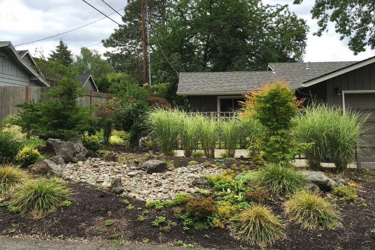 portland rain garden