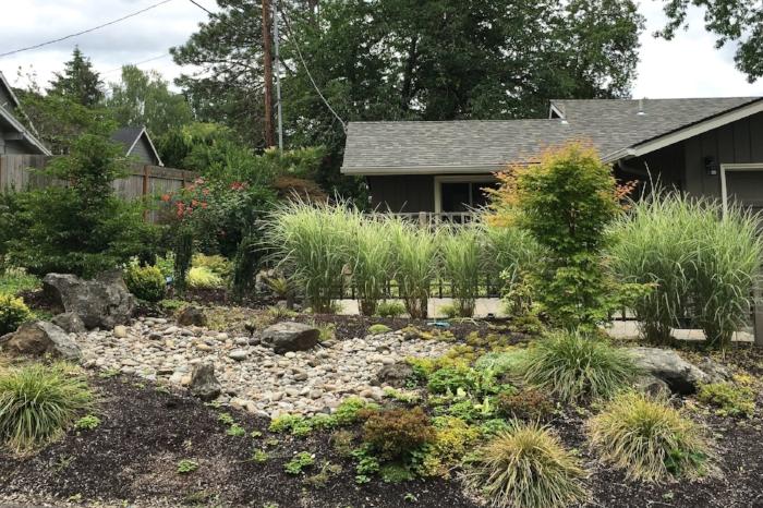modern-rain-garden.jpg
