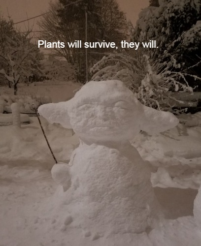 plants in snow