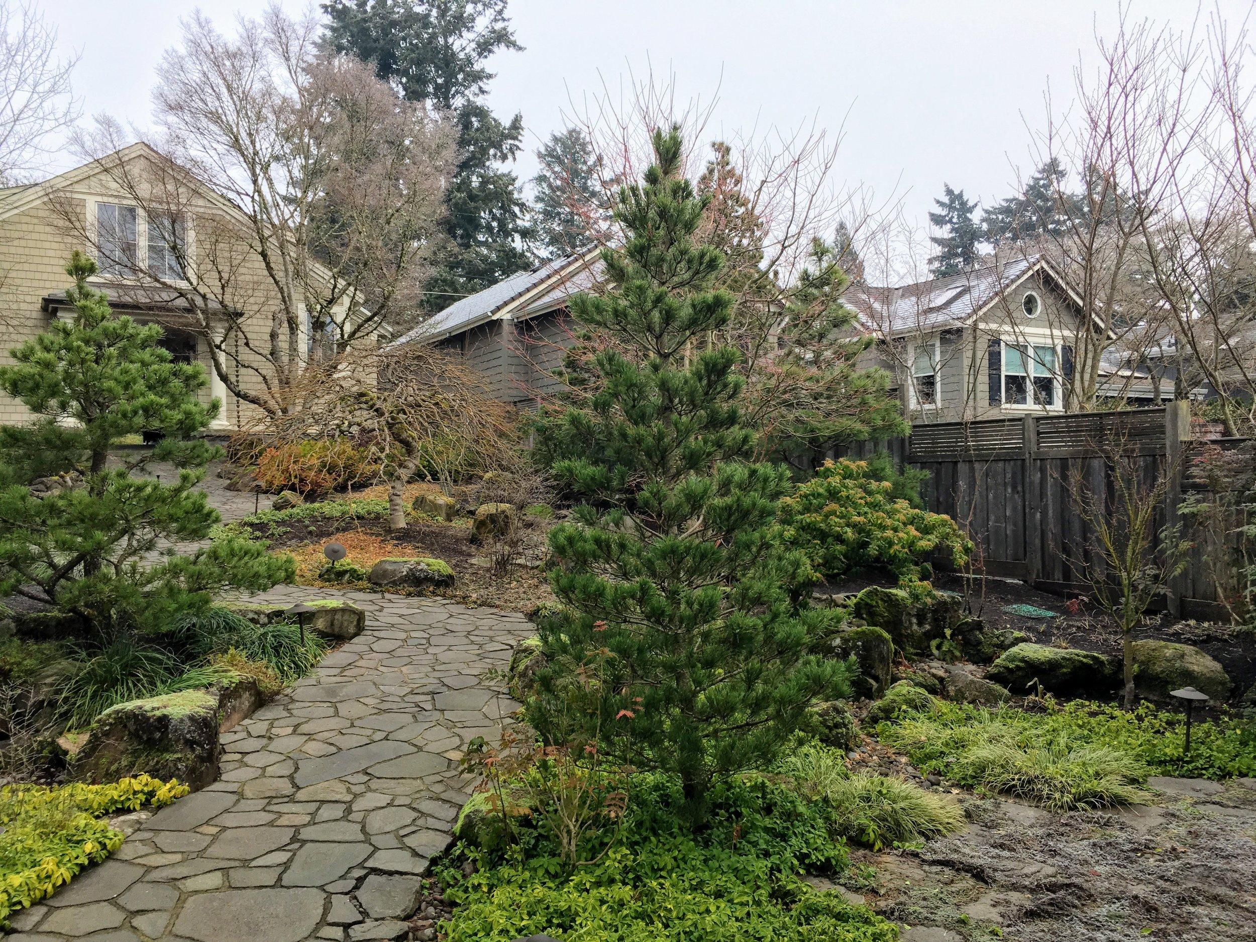 pine-tree-in-winter.jpg