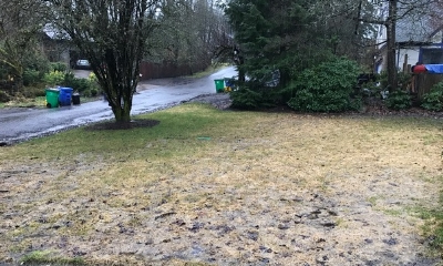 Fescue Lawns - A casualty of Portland's cold winter?