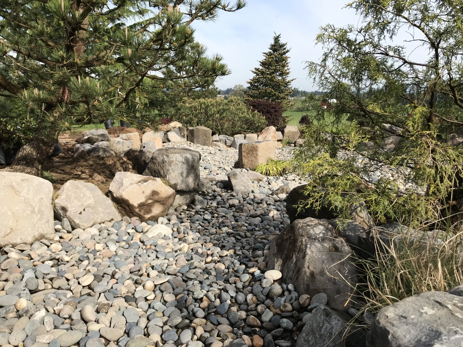Dry creek and plantings in Ridgefield WA