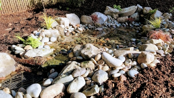 natural spring rain garden