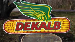 dekalb  seed corn kernels.jpg