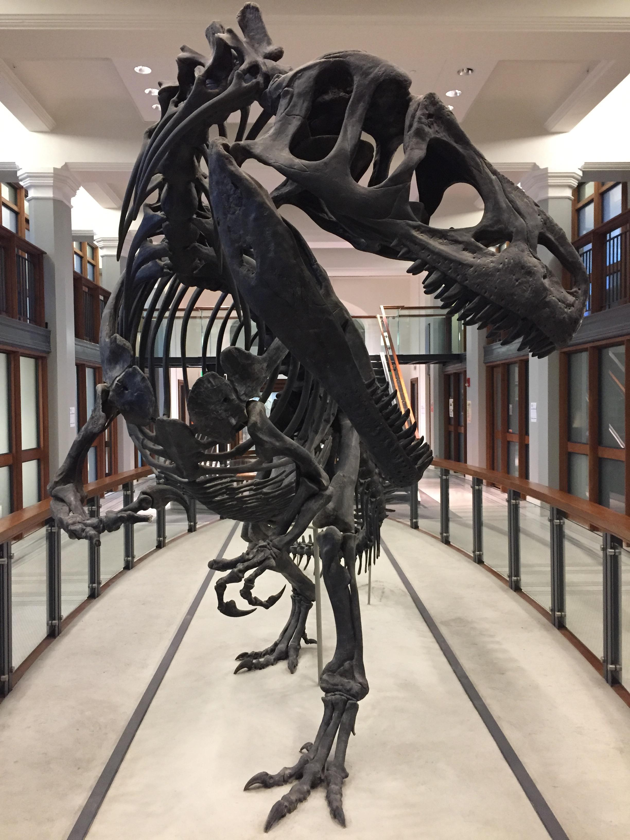 Allosaurus , Guyot Hall