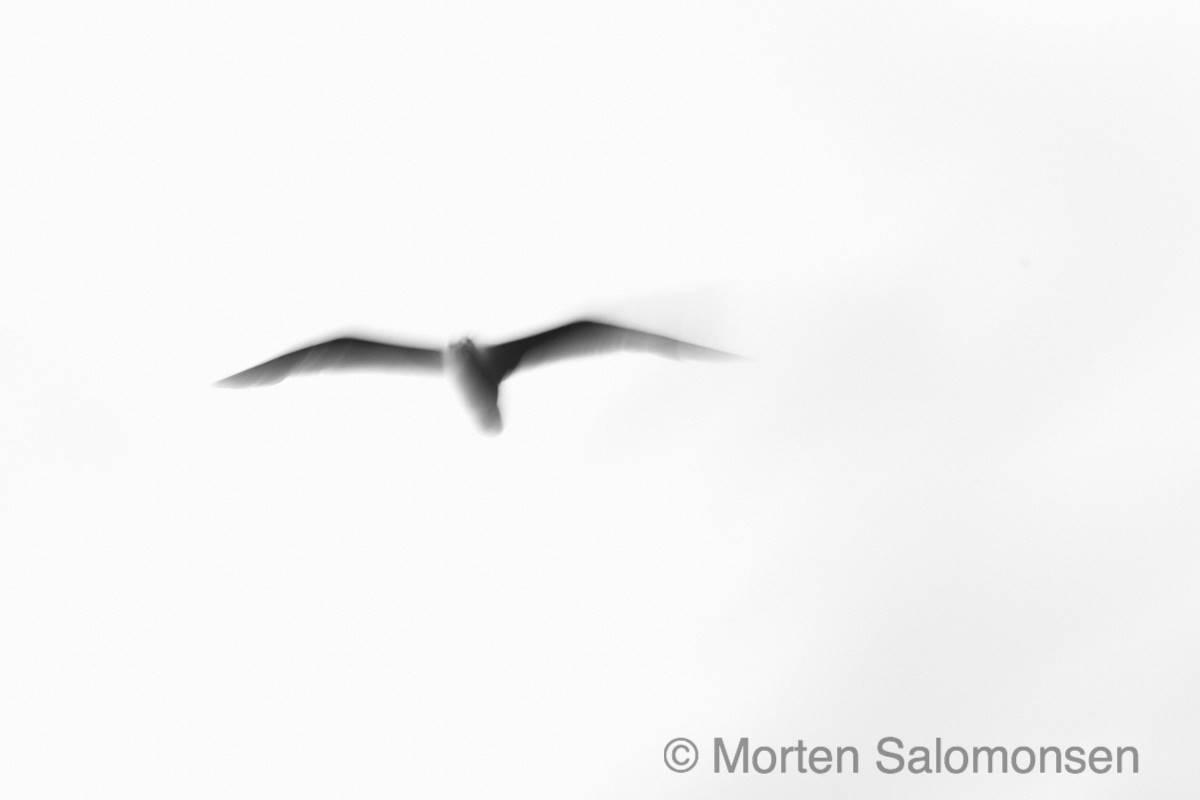 L1005236-MortenSalomonsen_inverted_copyright.jpg