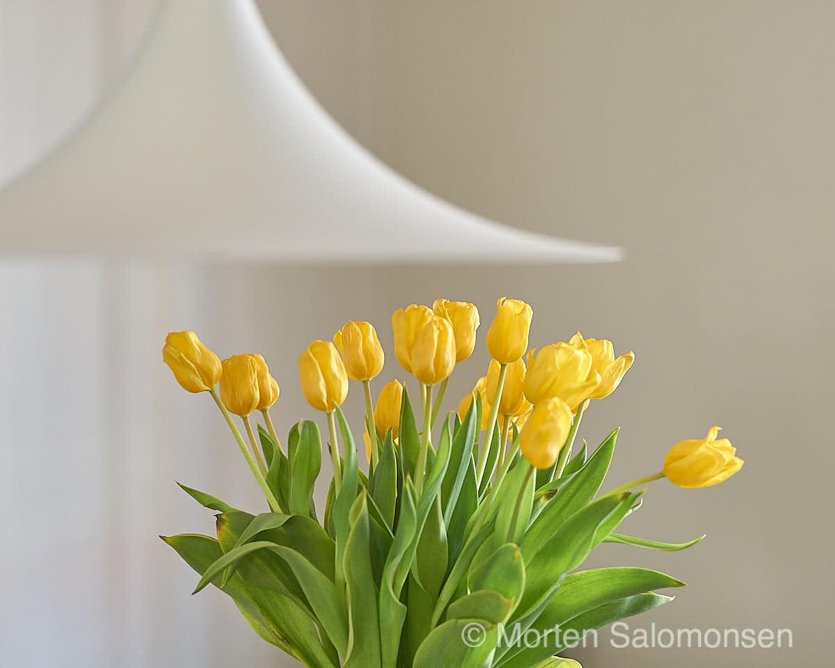 Tulips (1/60s @ f/4.8, 75mm ISO 800)
