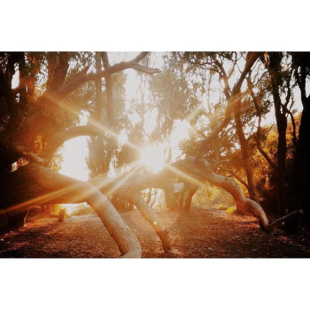 Happy Summer Solstice beautiful friends! Savor in the vibes of long, luminous days and lasting light ❤🌞✨