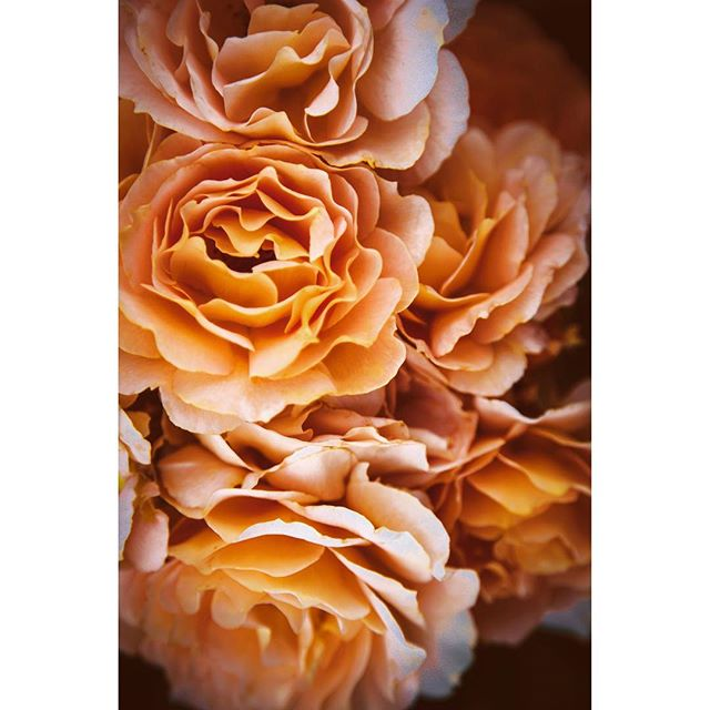 """""""The rose shadows said that they loved the sun, but that they also loved the dark, where their roots grew through the lightless mystery of the earth. The roses said: You do not have to choose. """" ― Robin McKinley, Sunshine"""