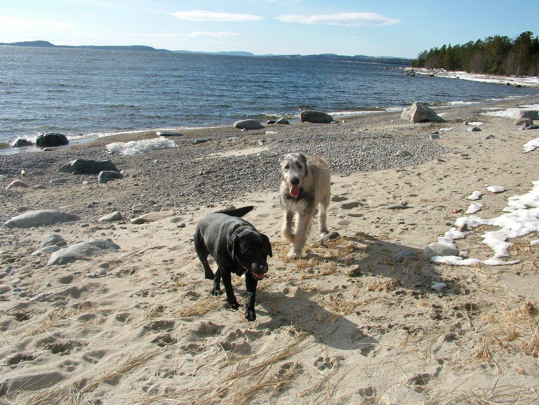 5 Ellie and Wilma on the beach.jpg