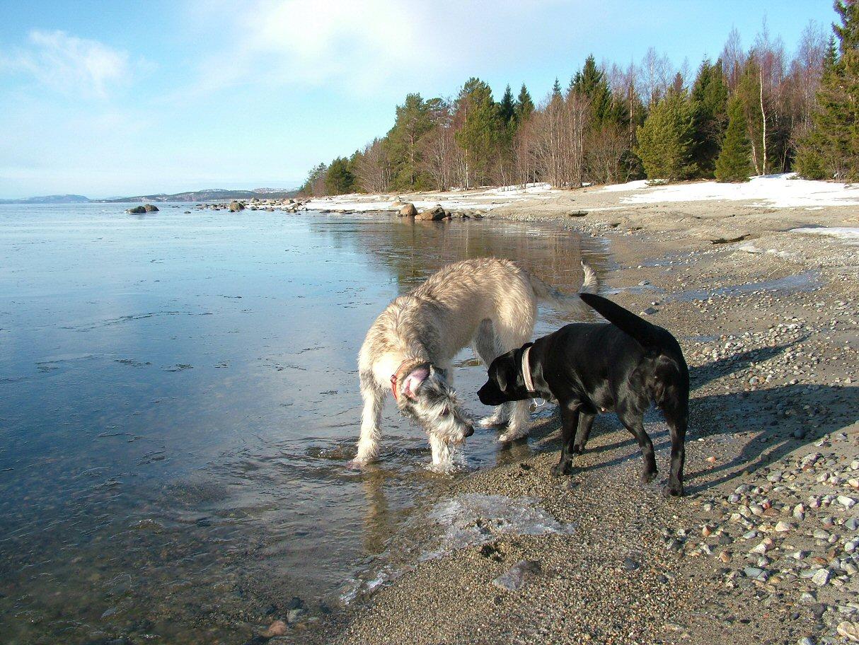 4 Ellie & Wilma playing in the sea.jpg