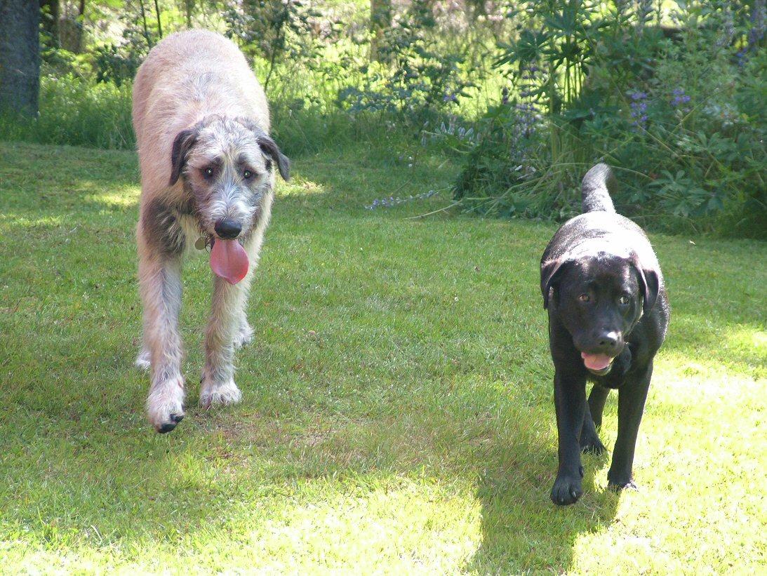Wilma & Ellie  walking.jpg