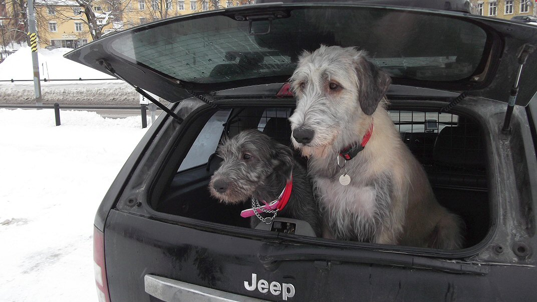 Ellie and Daisy in back of Jeep