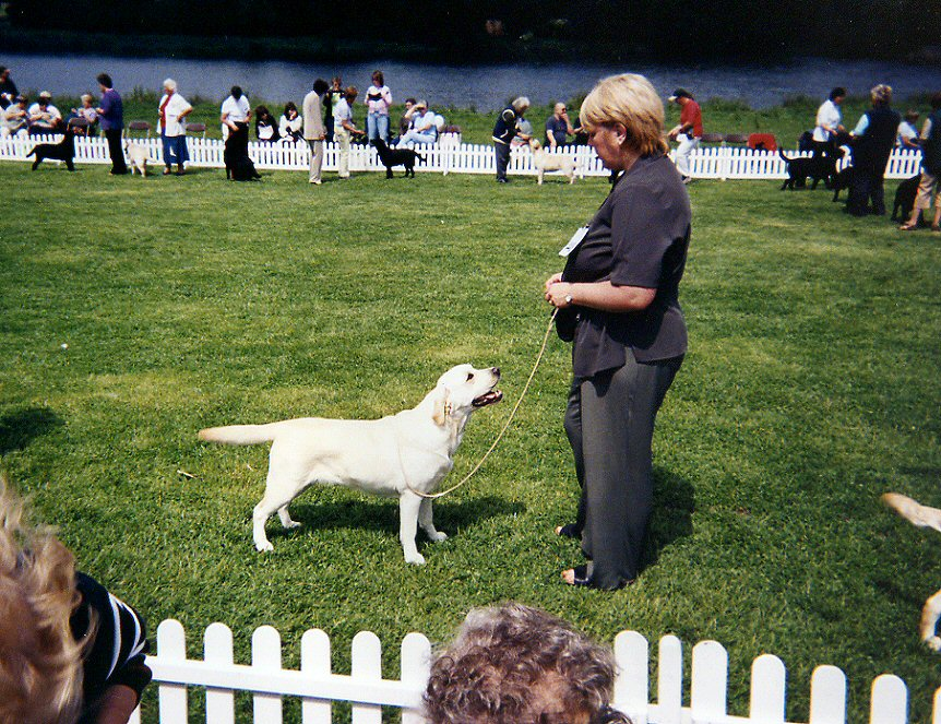 Suz showing Pebble at the Labrador Centenary Show