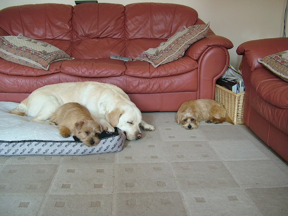 Its a hard life! from left Nelly, Pebble and Donut fast asleep.