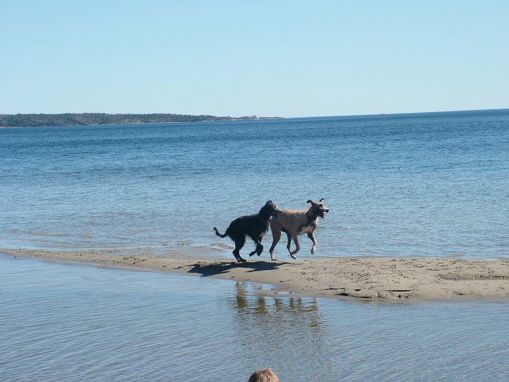 Ellie and Daisy having great fun running in the sea!