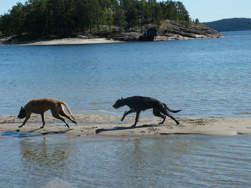 The woolfies running along the sand bar.