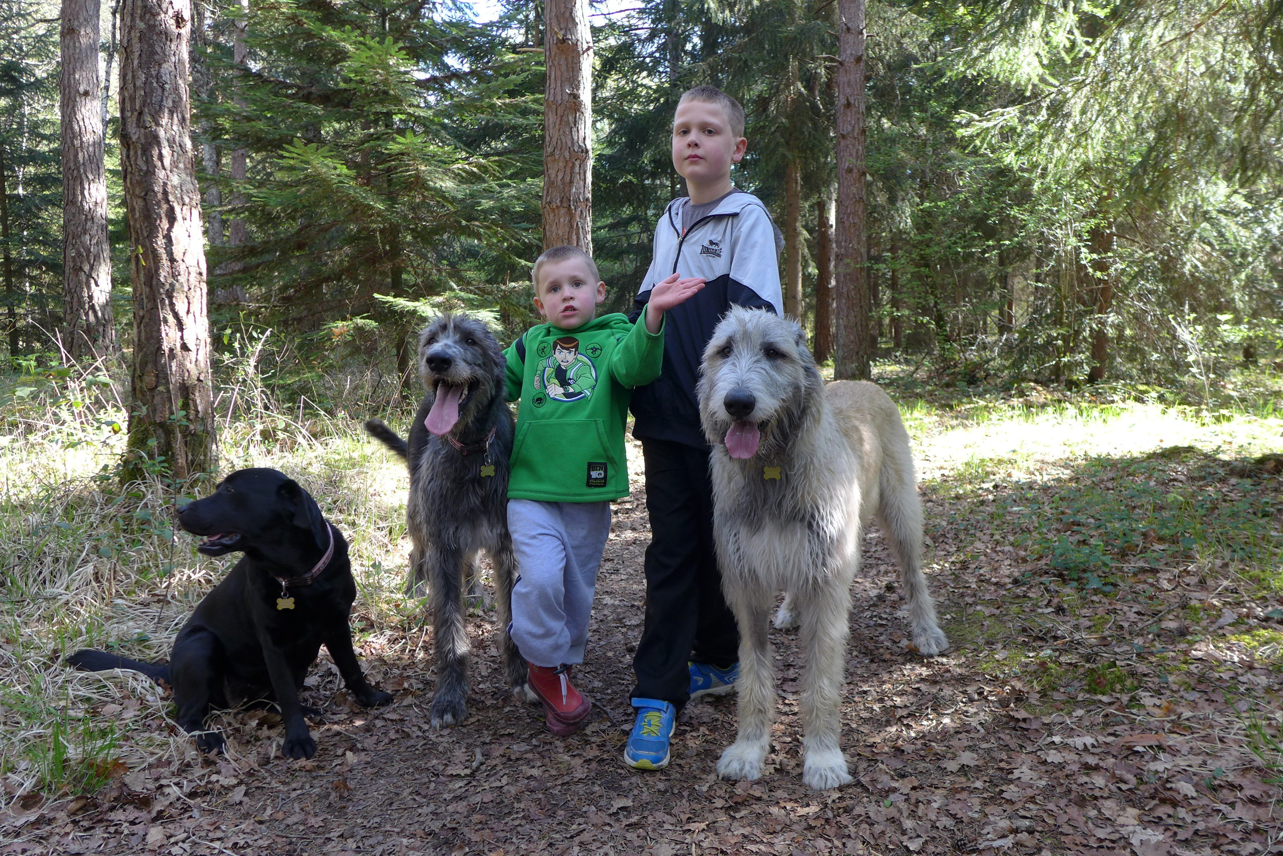 The dogs and children enjoying Melliant Forrest