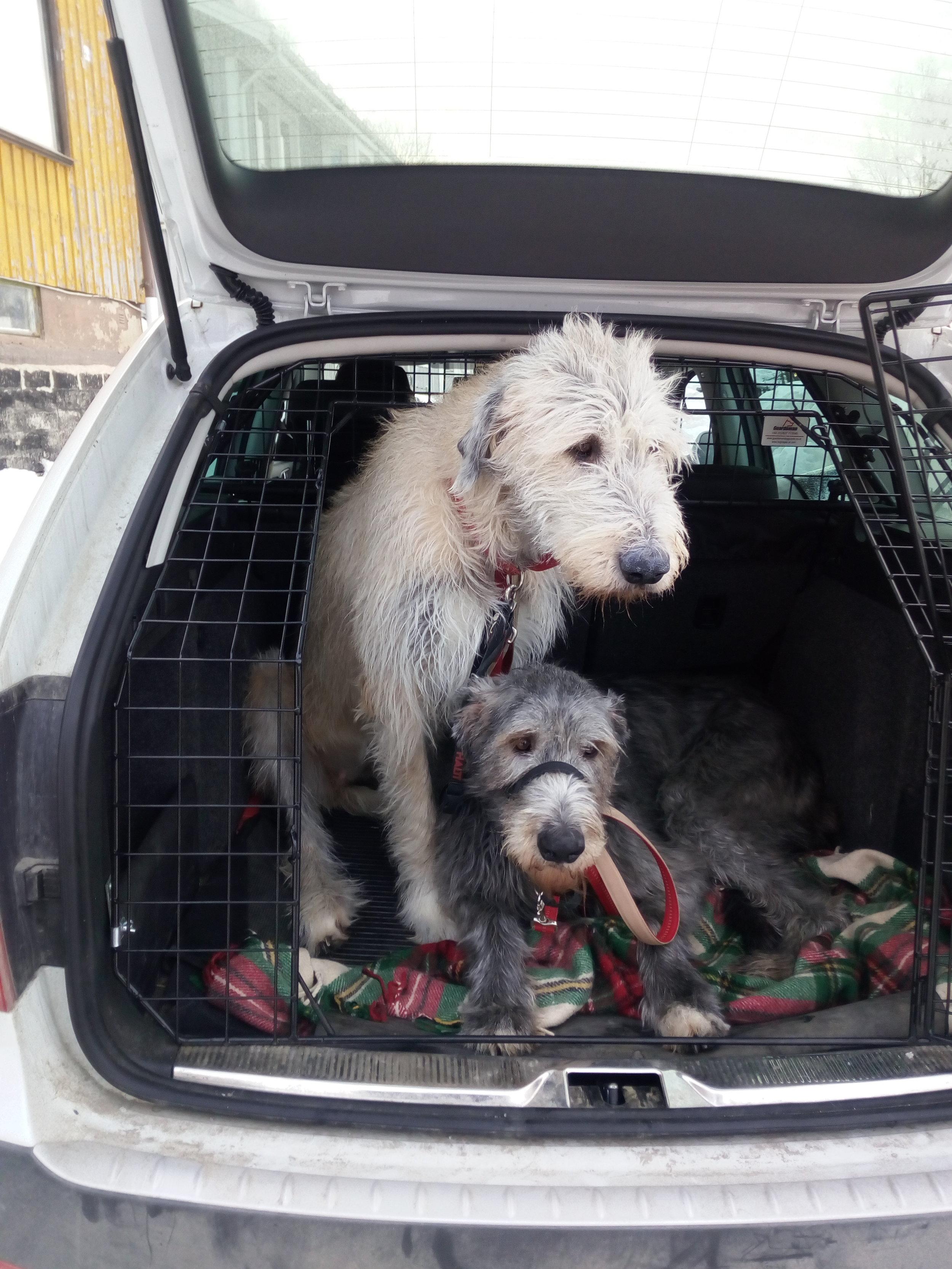 dogs in car.jpg