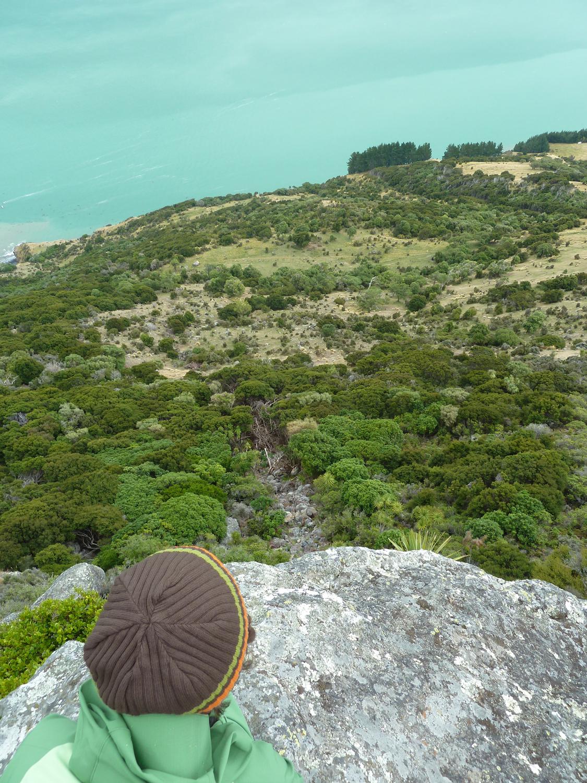 Fangorn Forest Below