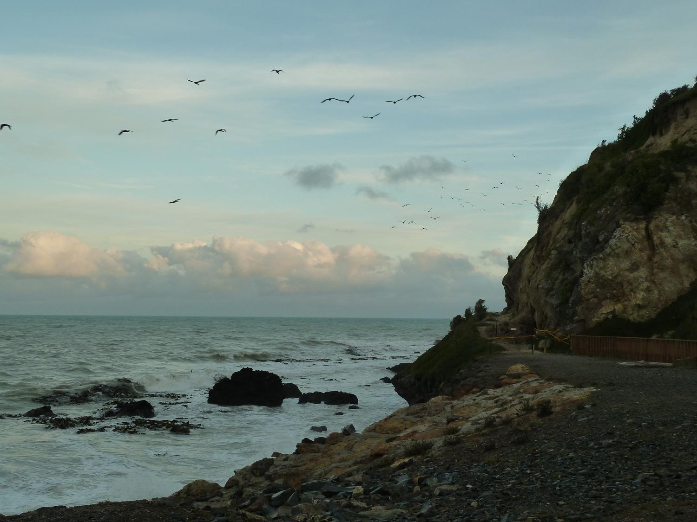 Blue Penguin Viewing Spot