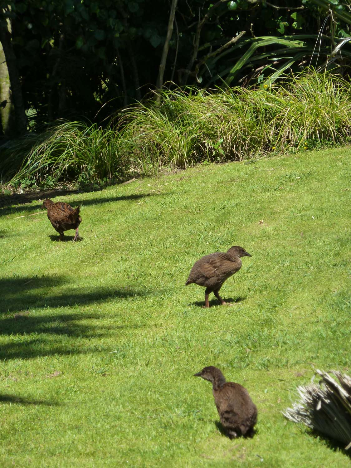Weka Central