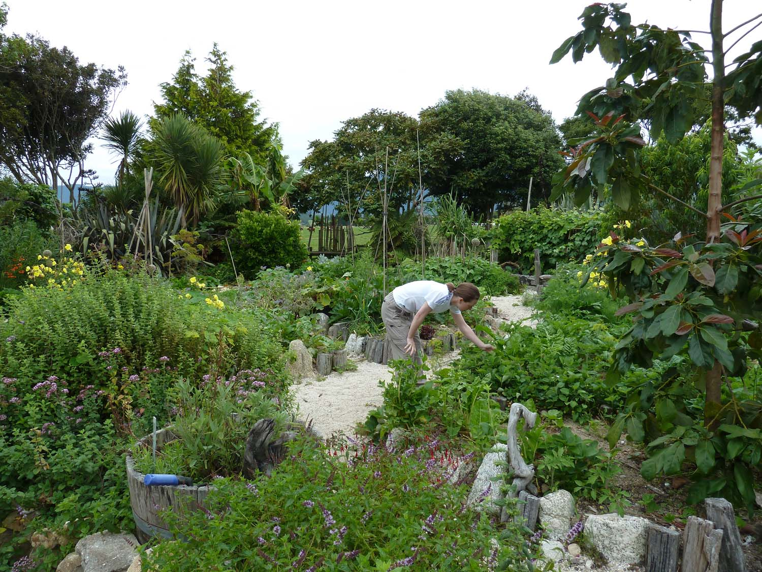 Rongo Vegetable and Herb Garden