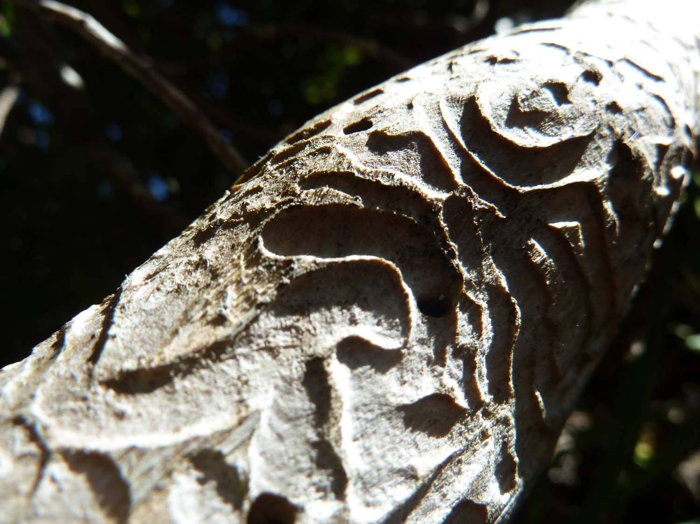 Natural Carving