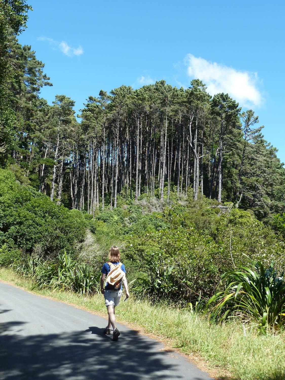 Walking Through Zealandia