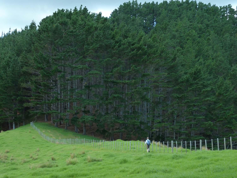 Along The Farmland Fence