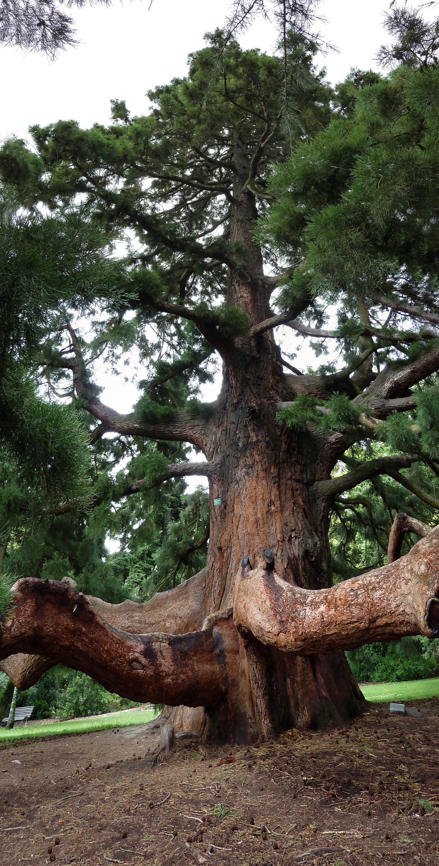 04_tree.jpg