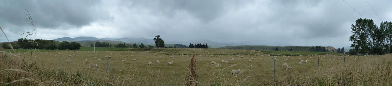 10_Sheep.jpg