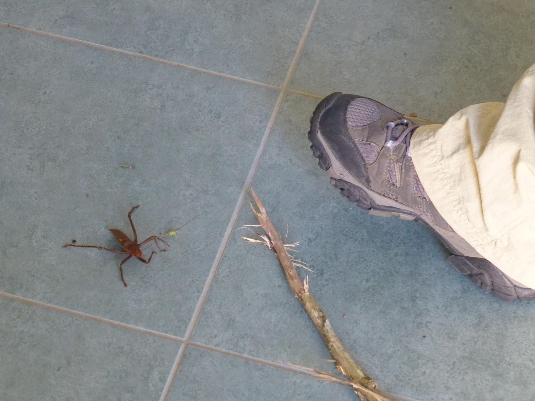 Strange Bug-Fellows