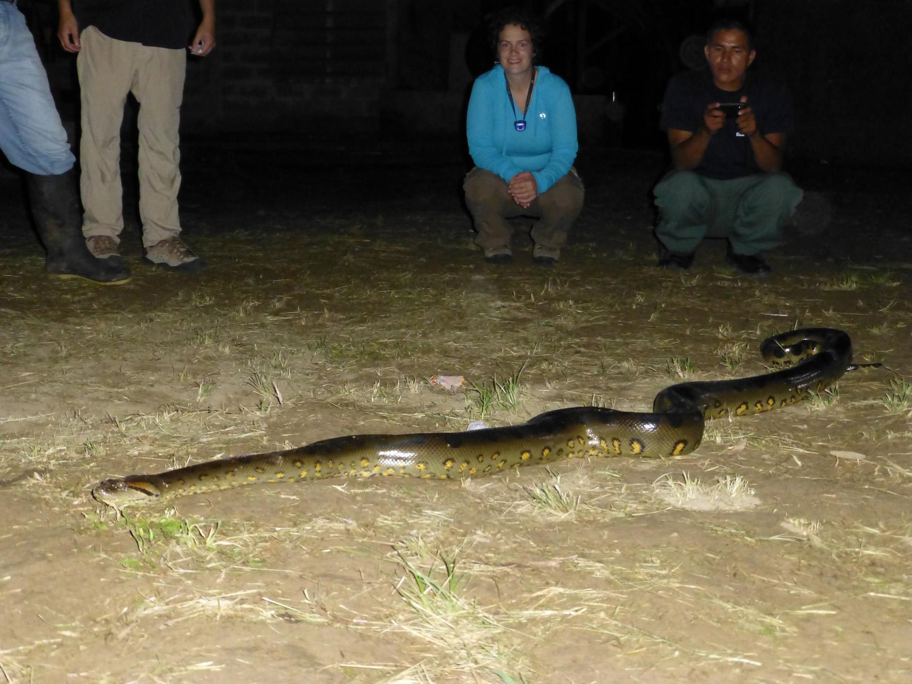 Posing With The Anaconda