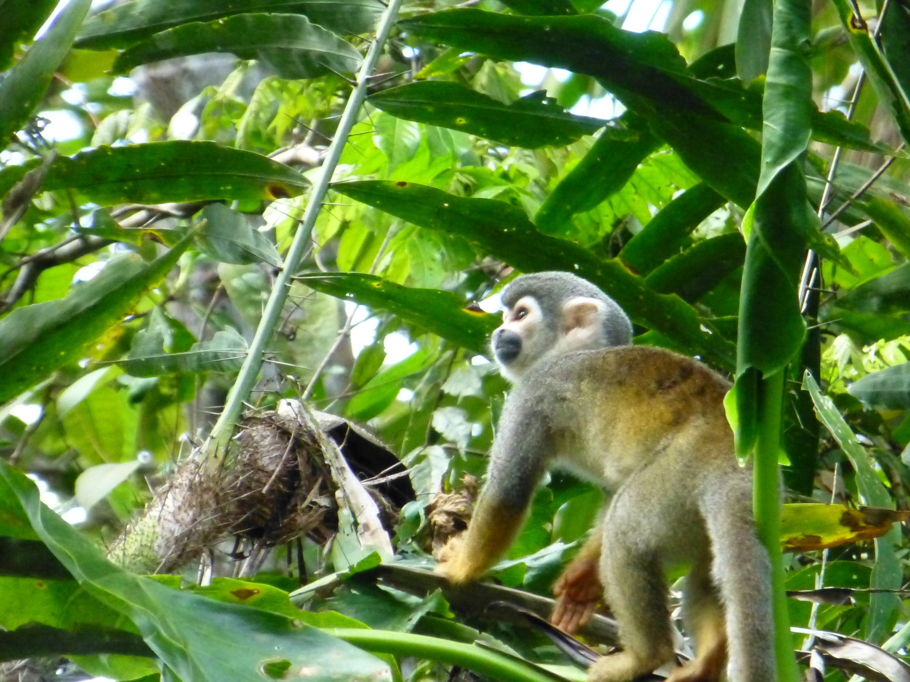 Here's just one of many squirrel monkeys making our day.