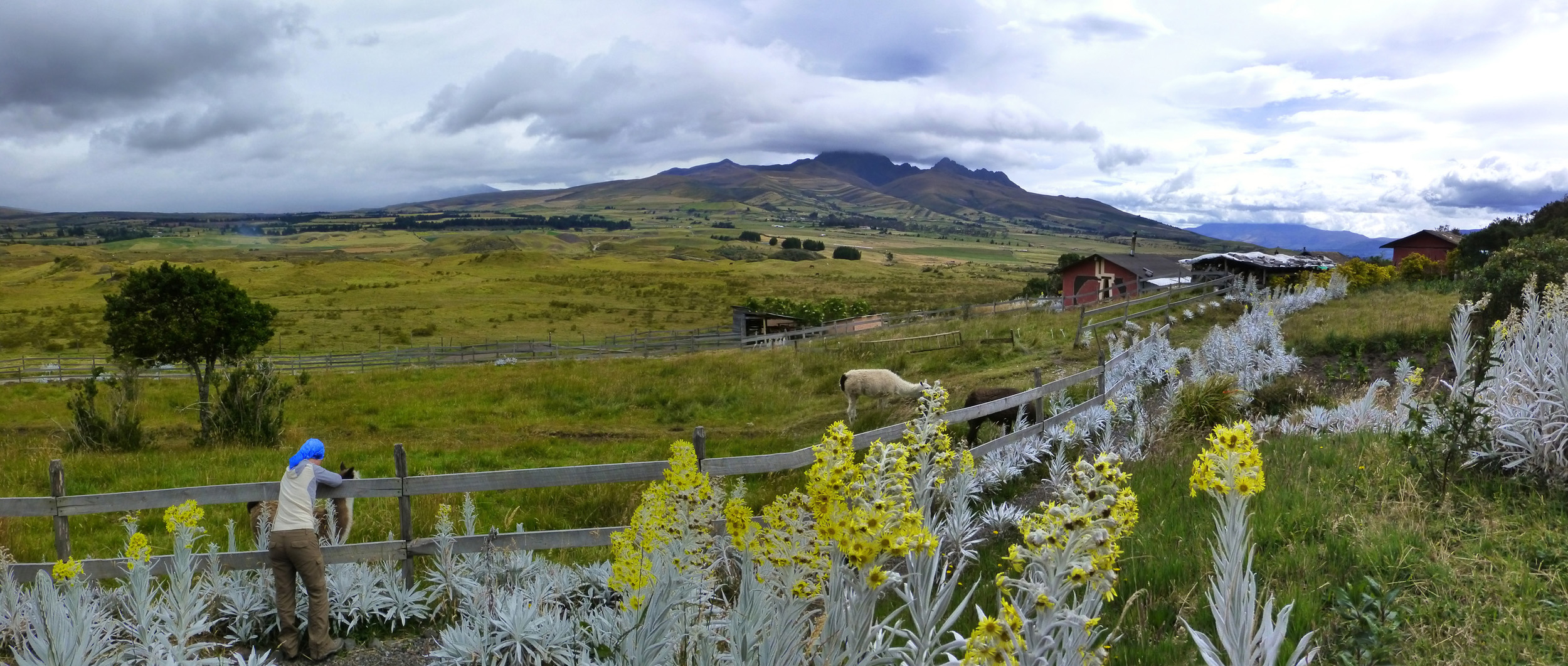 The Secret Garden. Here you can see the sprawling view, the quaint grounds, and some of the animals - which I was happy to spend time with. Sadly, Cotopaxi is shrouded by cloud at the moment.