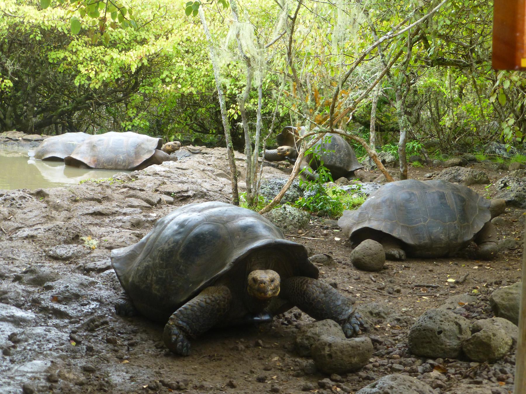A Tortoise Paradise