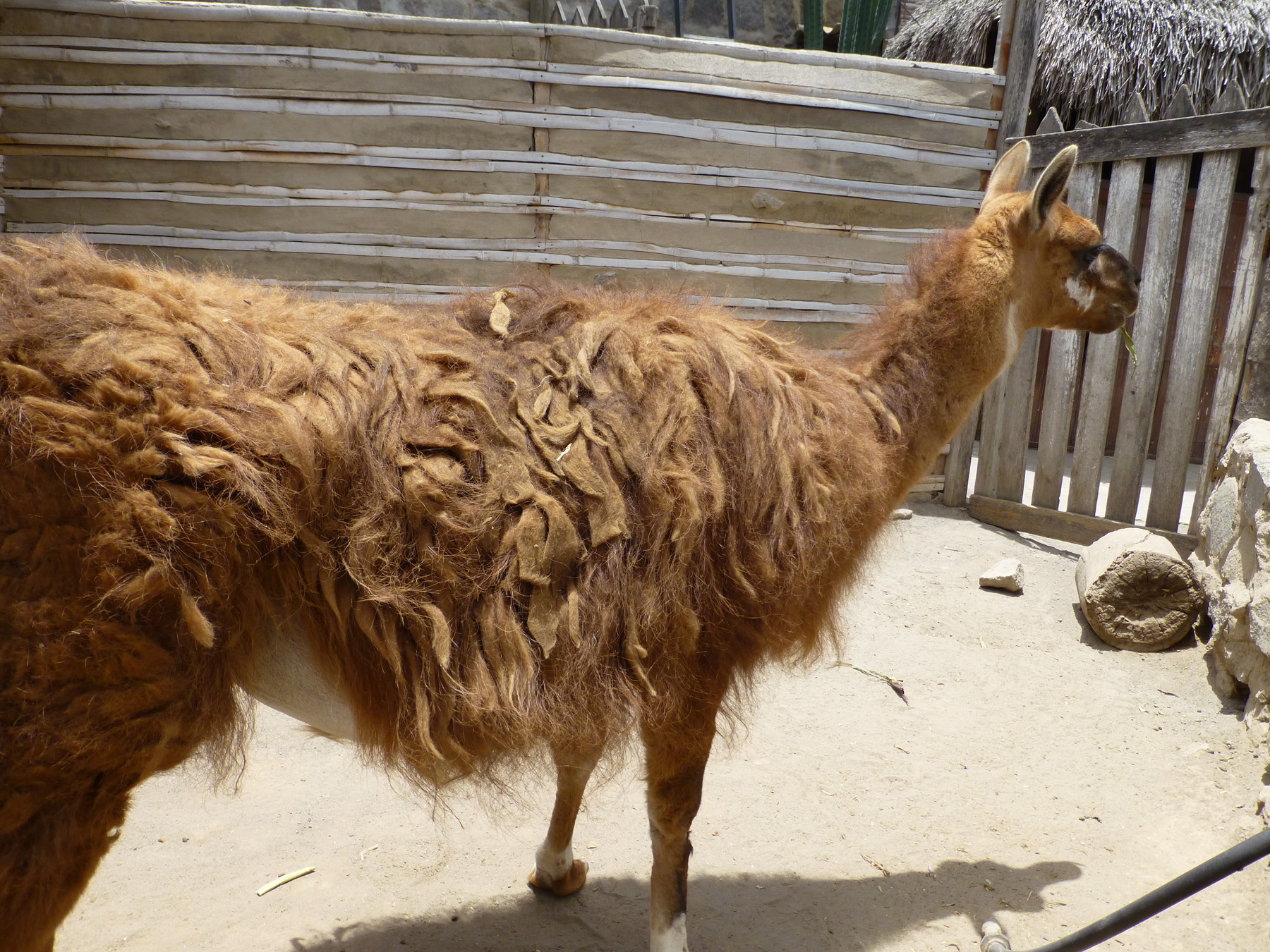 Llama Mat