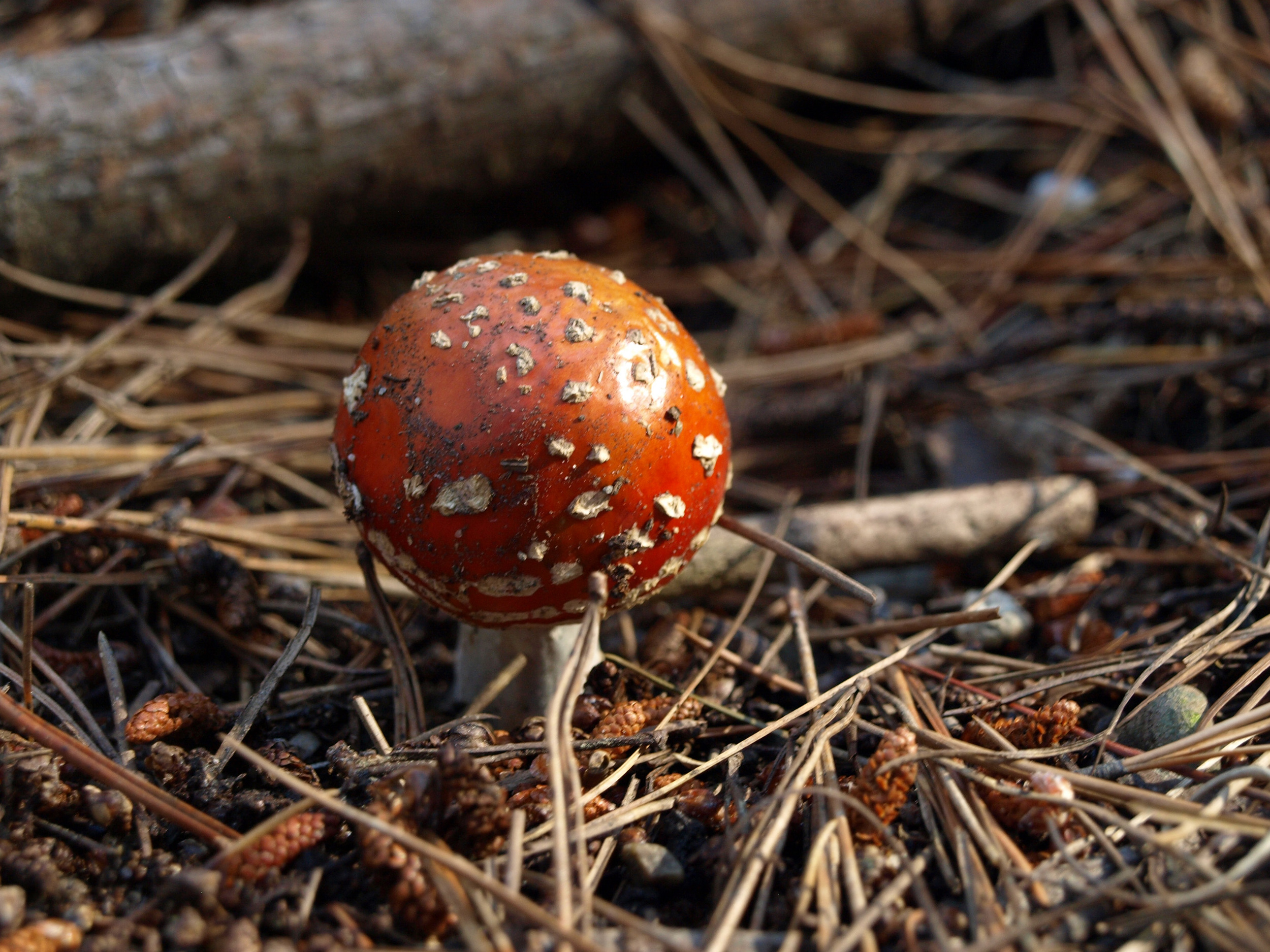Mythical Mushrooms