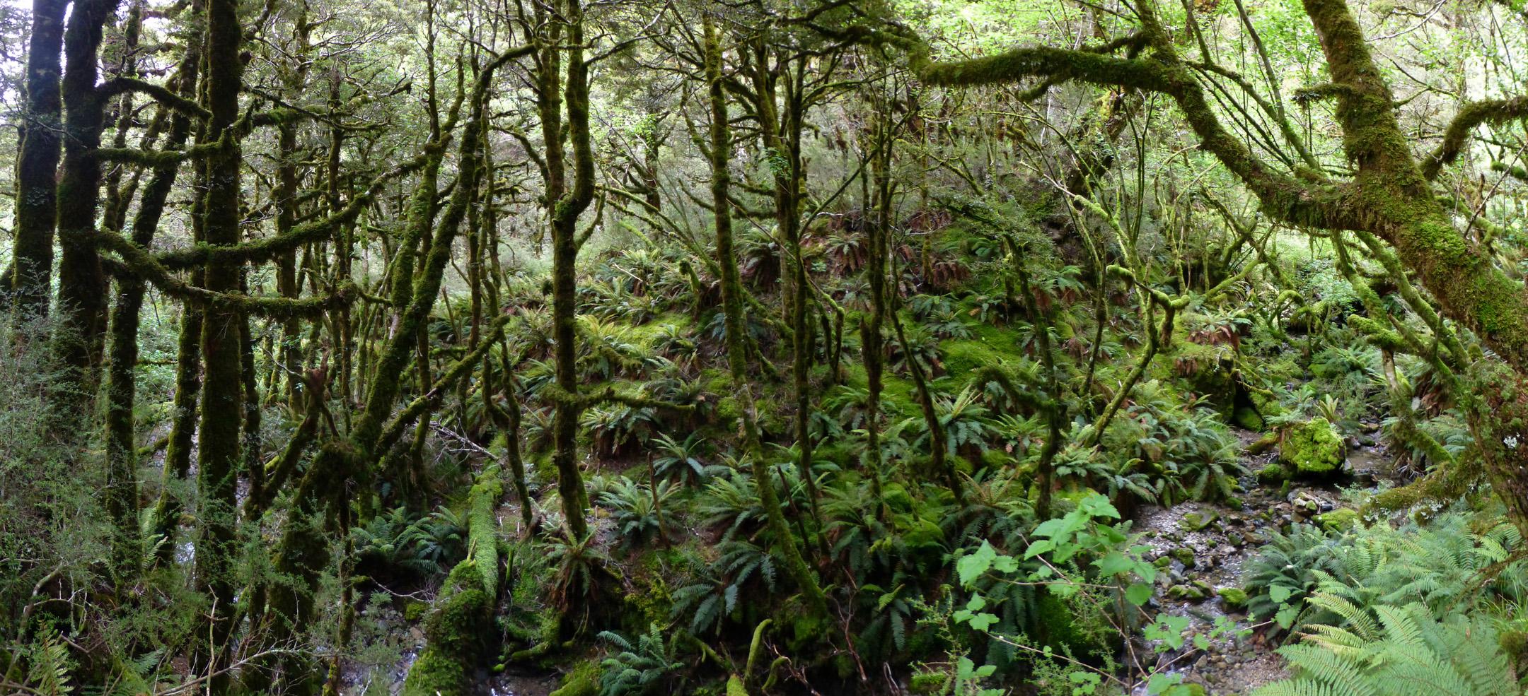 Fiordland Forest